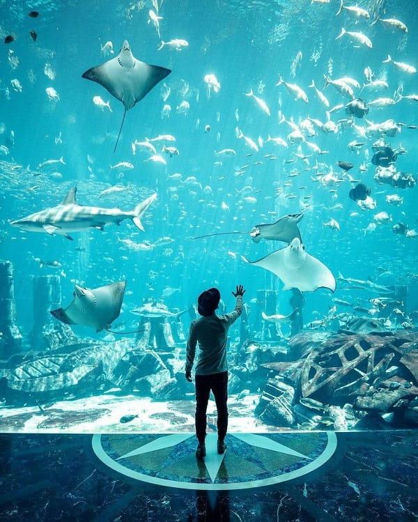 آکواریوم زیر آبی دبی از بهترین جاهای تفریحی دبی با خانواده